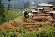 Милые картинки / Шри-Ланка