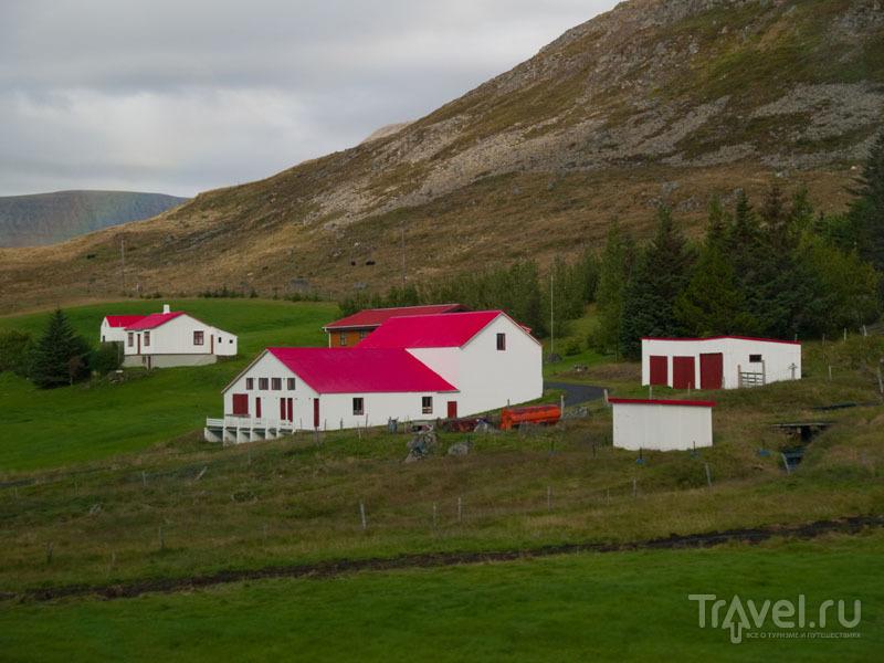 Яркие домики украшают исландские берега / Фото из Исландии