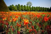 Цветы / Великобритания