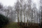 Зачарованный лес / Великобритания