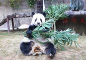 Панда Бат / Китай