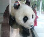 Старая панда / Китай