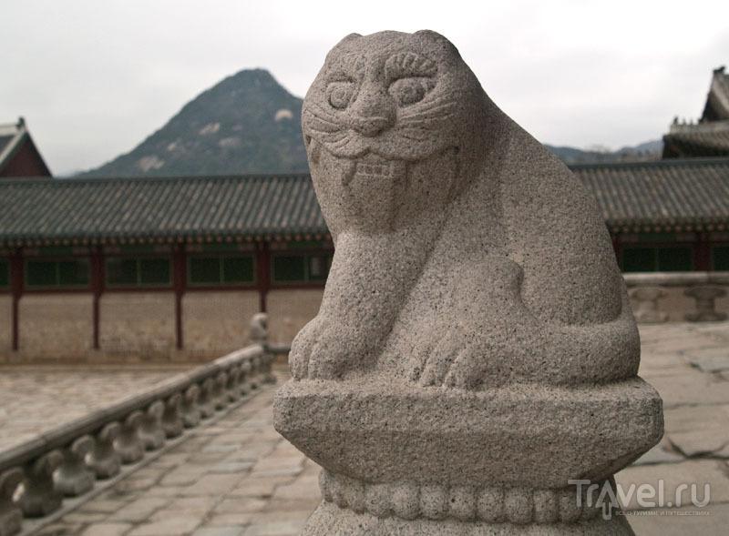 Корейский кот / Фото из Южной Кореи