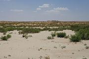 как отличается цвет песка / Узбекистан