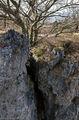 деревья цепляются за расщелины / Германия