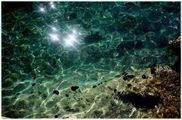 морские ежи / Хорватия