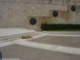 бродячие собаки / Греция
