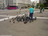 много голодных голубей / Греция
