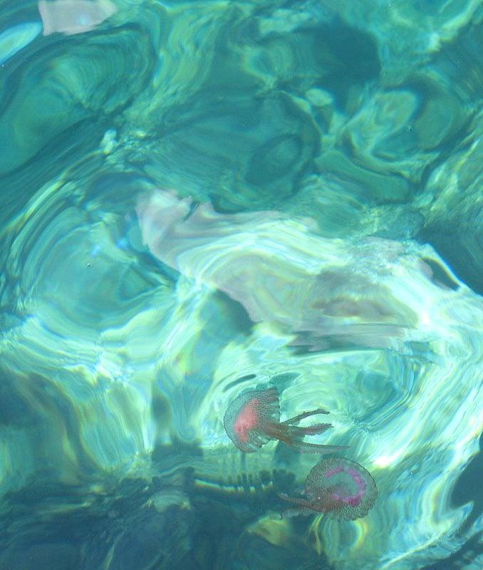 Медузы у мальтийского берега / Фото с Мальты