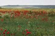 поле / Болгария
