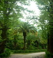 парк в Гаграх / Абхазия