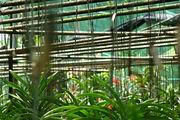 сад орхидей / Таиланд