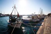 десятки парусных яхт