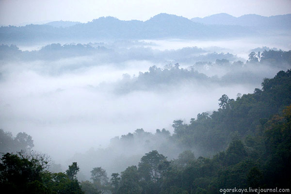 Джунгли Лаоса / Фото из Лаоса