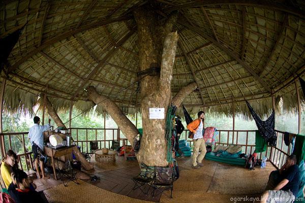 Дом на дереве в джунглях Лаоса / Фото из Лаоса