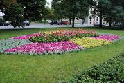 цветы / Польша