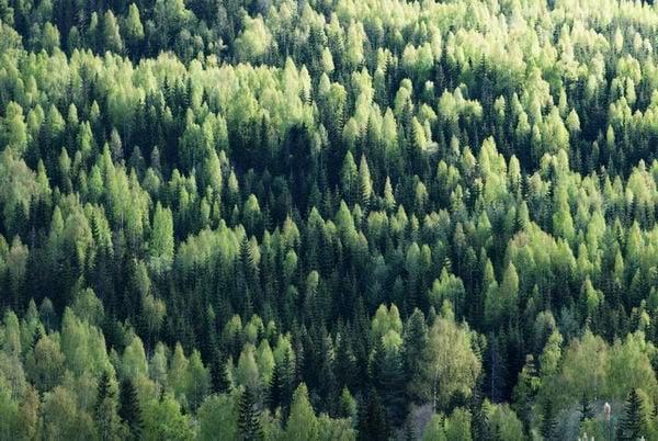 Леса Норвегии / Фото из Норвегии