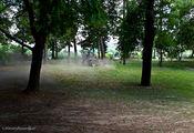 опавшие листья / Венгрия