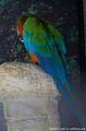 попугаи / США