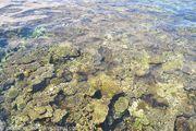 коралловый риф / Фиджи