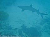 акулы / Фиджи