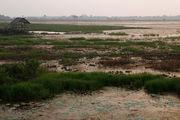 болото / Камбоджа