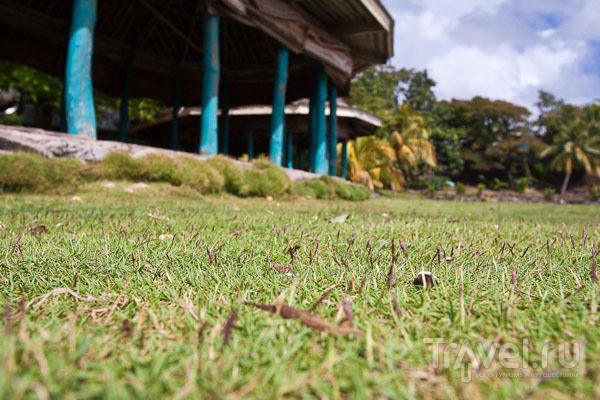 Газонная трава на Самоа / Фото с Западного Самоа