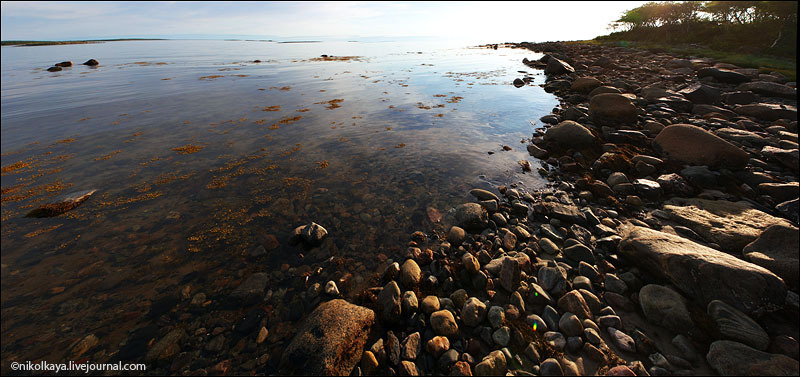 На побережье Большого Соловецкого острова / Фото из России
