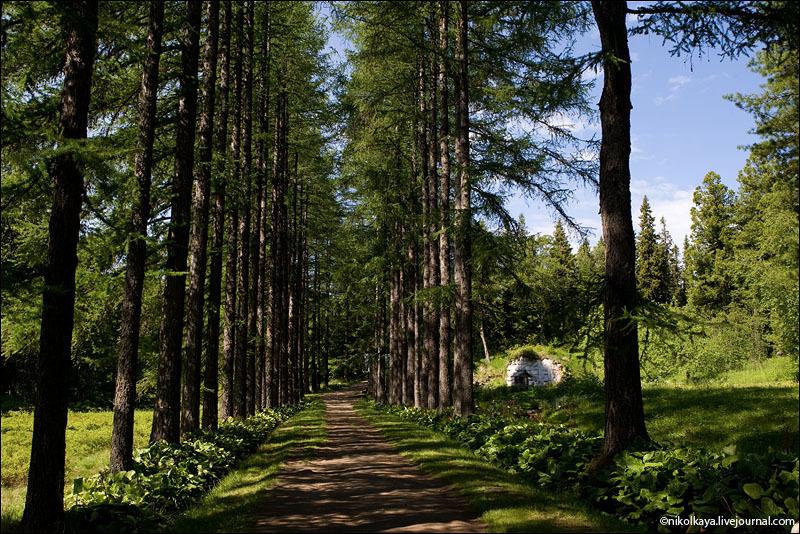 Ботанический сад на Соловках / Фото из России