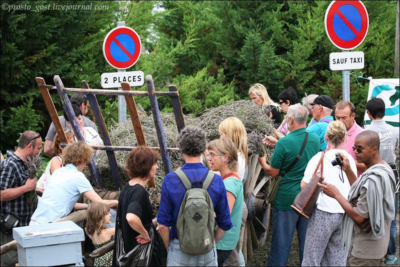Телеги с лавандой на фестивале лаванды в Валансоле / Фото из Франции