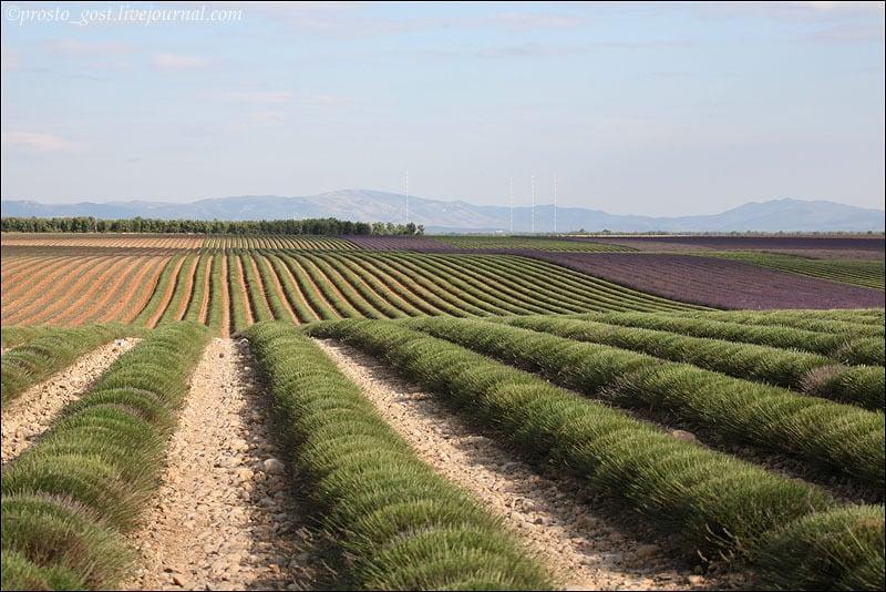 Пейзаж Прованса / Фото из Франции