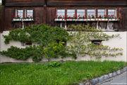 яблоня / Лихтенштейн