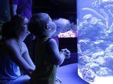 аквариум / Испания
