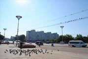 птицы / Молдавия