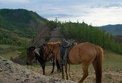 щипали травку / Монголия