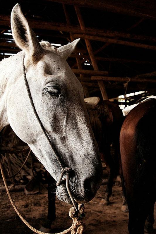 Лошадь с кубинской фермы / Фото с Кубы