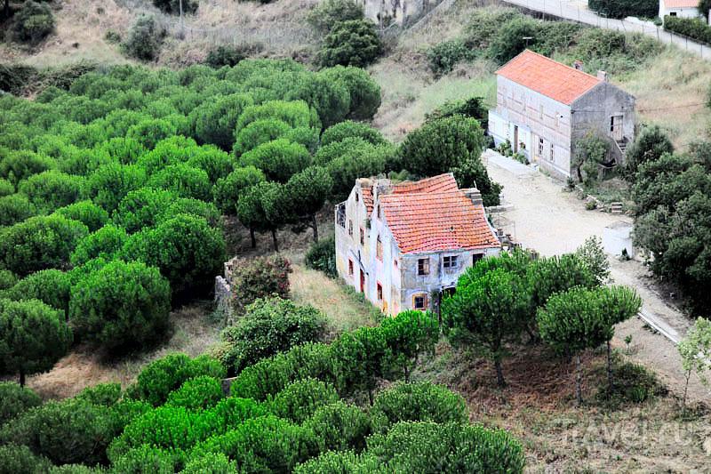 Холмы вокруг Палмелы / Фото из Португалии
