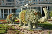 слоны / Казахстан