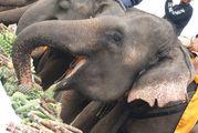 слон / Таиланд