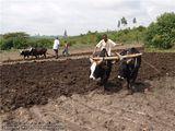 житель племени Оромо / Эфиопия