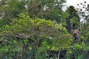 Растительность / Филиппины