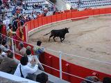 первый бык / Испания