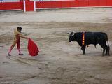 подпускает быка / Испания