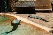 крокодилы / Испания
