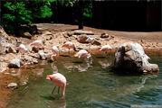 фламинго / Испания