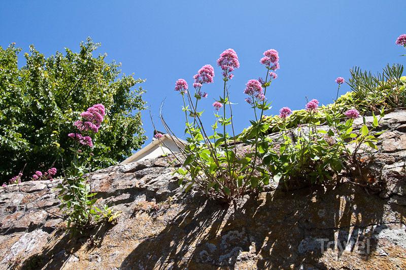 Цветы на острове Олдерни / Фото из Великобритании
