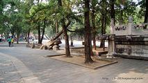 Деревья и плиты / Китай