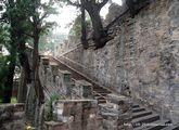 Деревья из стены / Китай