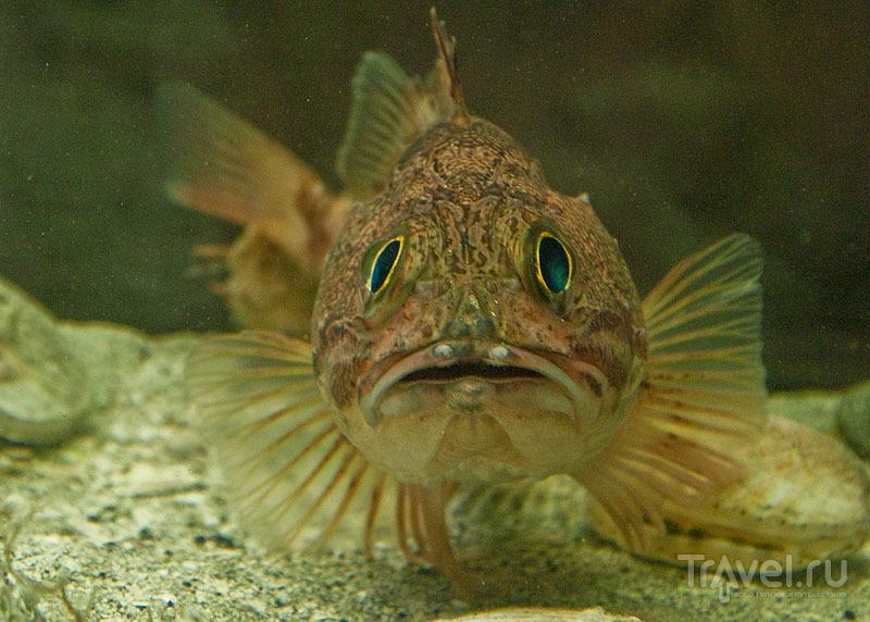 В Foroya Sjosavn рыб можно рассмотреть во всей красе / Фото с Фарерских островов