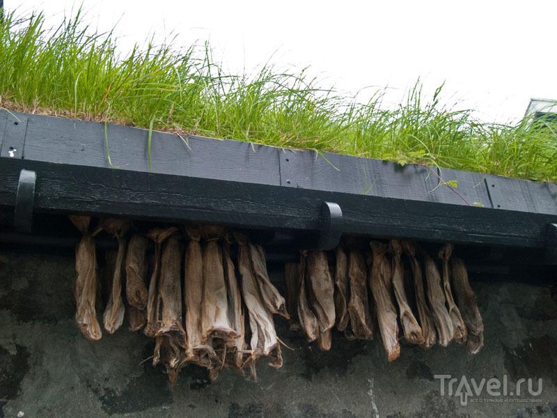 Вяленая рыба, Тьёрнувиг / Фото с Фарерских островов